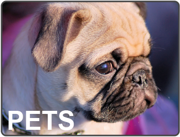 Pet Products & Services Knowledge Center from Packaged Facts