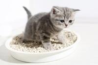 cat litter.jpg